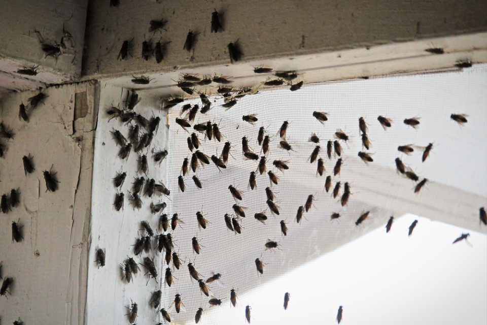 Fly Infestation & Removal Services | SPC