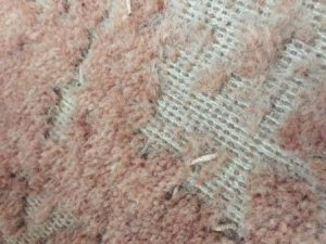 Moth damage to carpet
